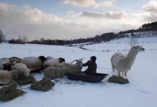 Winter feeding