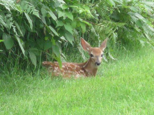 Little deer.IMG_3406