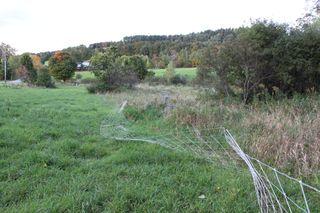 Coyote.fence.IMG_0934