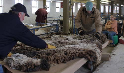 Cilantros fleece