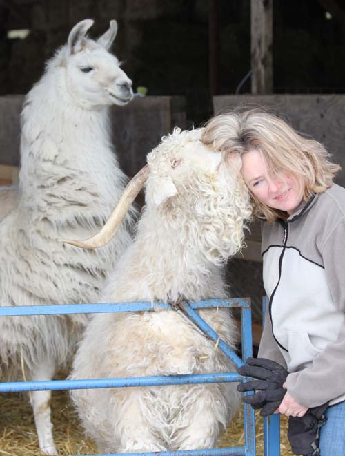 Goat kiss 2