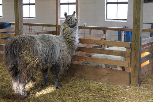 Crackerjack & aberdeen's lamb