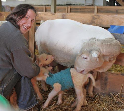 Holly & kodiak's lambs
