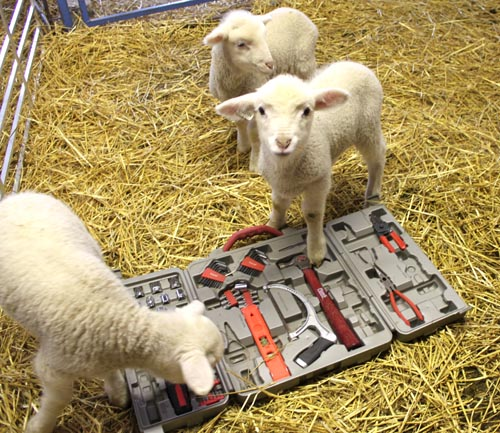 Lambs with tools