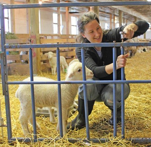 Lamb holly fix creep