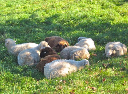 Tired flock