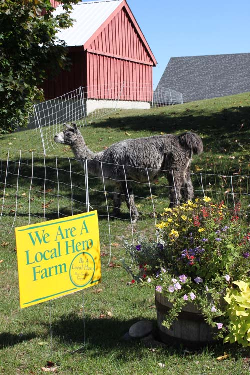 Local hero llama