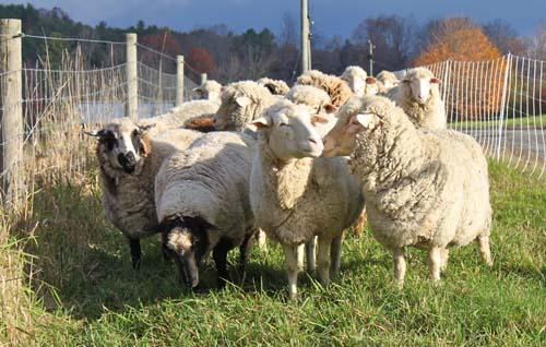 Flock all hallows eve II