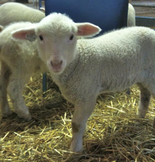 Bottle lamb garamond