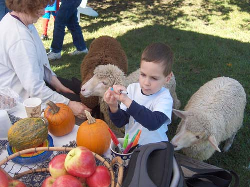Sheep pumpkins.lp