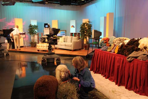 Lambs studio