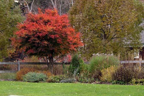 Garden all hallows eve III