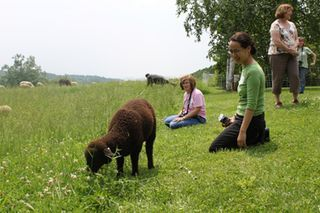 Foxfire fiber. sheep shares lamb visit day 2010.