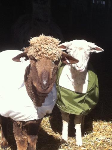 Ewes sunshine.foxfirefiber