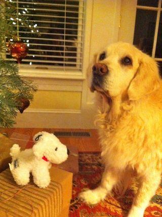 Daphne's christmas