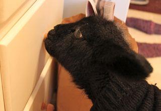 Foxfire fiber. mistral. bottle lamb 2010