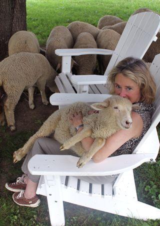 Foxfire fiber. sheep shares shepherd lamb 2010