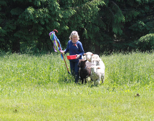 Strolling of the lambs 1