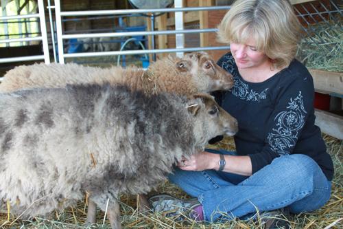 Shetland sheep foxfire fiber 2