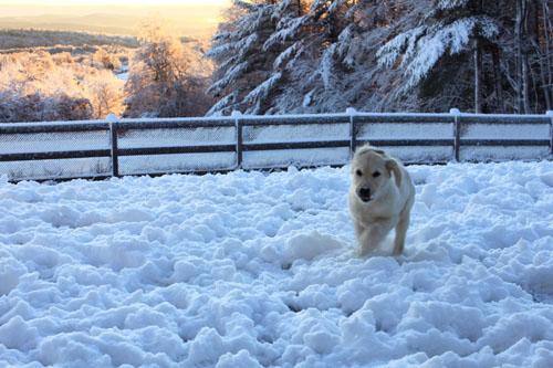 Snow puppies 3. foxfire fiber