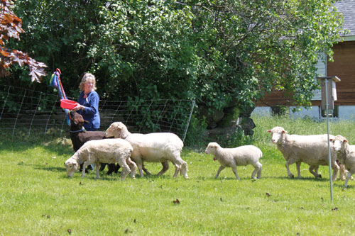 Strolling of the lambs 2