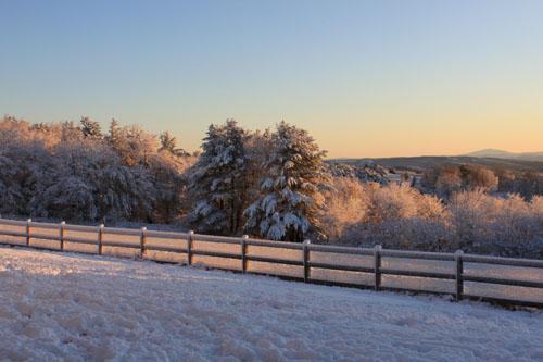 Snow daybreak. foxfire fiber