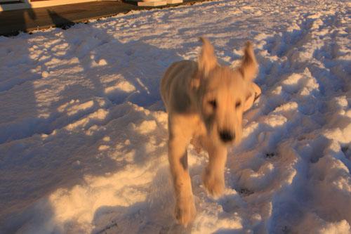 Snow puppies 4. foxfire fiber