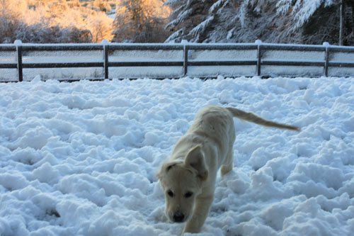 Snow puppies 5. foxfirefire