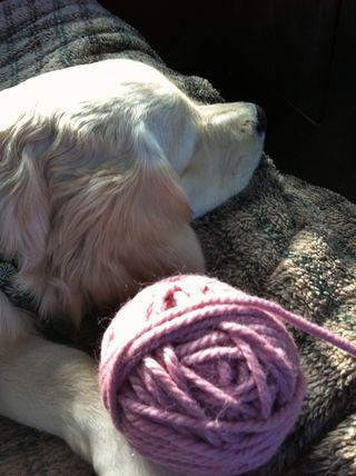 Zoe in car 3.foxfire fiber