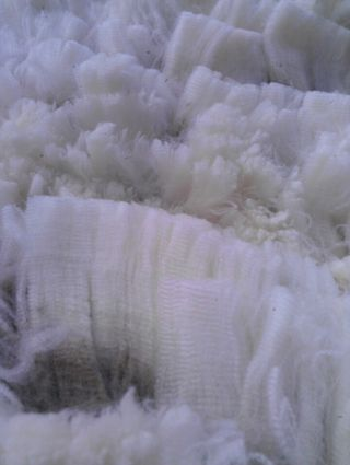 Cormo Wool Close Up. Gorgeous. Foxfire Fiber