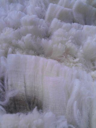 Cormo Wool Close Up. Gorgeous. Foxfire Fiber