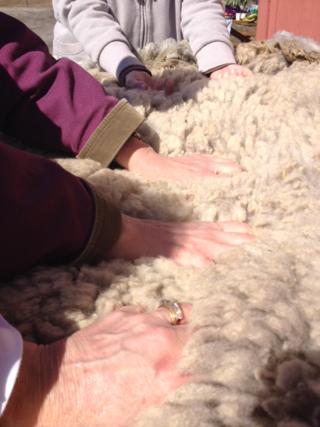 Wool fondling. Foxfire Fiber