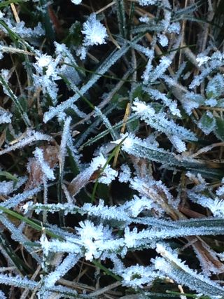 Frosted grass close up. Foxfire Fiber