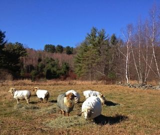 Flock Thanksgiving. Foxfire fiber
