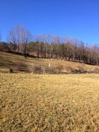 Sheep flock on pasture Thanksgiving Day