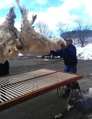 Flying Fleece. Foxfire Fiber