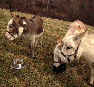 Three little donkeys. Foxfire Fiber & Designs