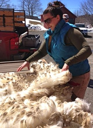 Holly Skirting Fleece. Foxfire Fiber