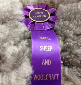 Grand Champion Fleece. Cilantro. MA Sheep Wool. Foxfire Fiber