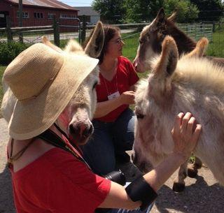 Donkey groomathon at Strolling of Sheep. Foxfire Fiber