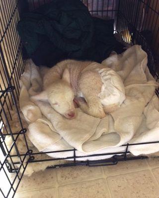 Snug. Foxfire Fiber