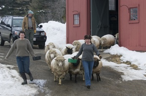Barb_holly_leading_flock