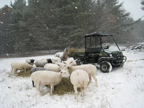 Winter_breakfast_high_pasture